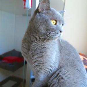 hotel dla kotów warszawa
