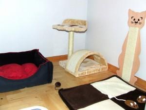 hotel dla kotów w Warszawie